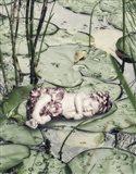 Sleeping on Lily Pads Art Print