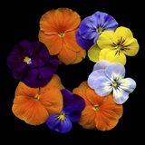 Happy - Violets Art Print