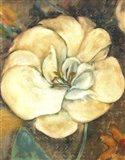Cream Flower 2 Art Print