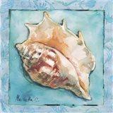 Shell 3 Art Print