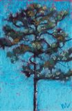 Tall Pine, Blue Sky, Julington Durbin Preserve Series Art Print