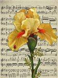 Background Iris 1 Art Print