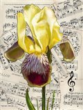 Background Iris 2 Art Print