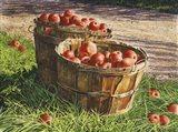 Apple Bushels Art Print