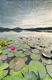 Morning Lilies Art Print
