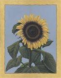 Apple Sunflower Art Print