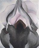 Black Iris Art Print