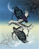 Raven Night and Day Art Print
