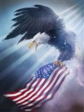 Eagle 1 Art Print