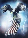 Eagle 3 Art Print