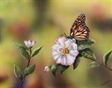 Monarch With Camellia Art Print