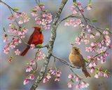 Spring Cardinals Art Print
