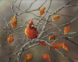 Fall Cardinal Art Print