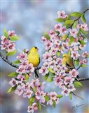 Finches In Cherry Tree Art Print