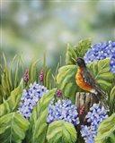 Robin With Hydrangeas Art Print