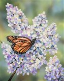 Butterfly with Hydrangea Art Print