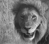 Lion In The Massai Mara Art Print