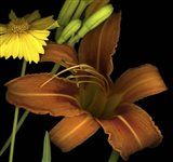 Day Lily and Coreopsis Art Print