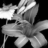 Day Lily & Coreopsis Art Print