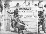 Littlest Cowboys: Eight Seconds Art Print