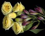 Yellow Roses With Alstromeria Art Print