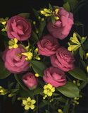 Camellia 2 Art Print