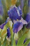 Iris I Art Print
