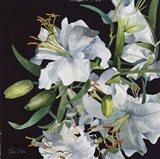 Lilies in Light Art Print