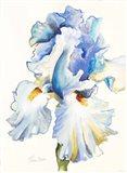 Iris in Blues Art Print
