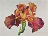 Orange Glow Iris Art Print