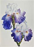 Royal Storm Iris Art Print