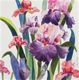 Iris Delight Art Print
