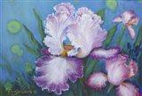 Lavender Ruffles Art Print