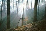 Smoke Forest Art Print