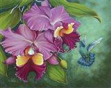 Gree Violet Eared Humming Bird Art Print