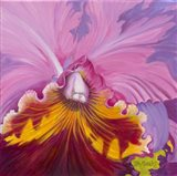 Orchid Series 1 Art Print