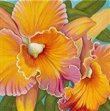 Orchid Series 2 Art Print