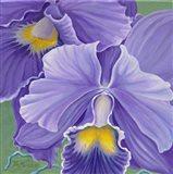 Orchid Series 3 Art Print