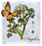 Angelica Herb Art Print
