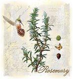 Rosemary Herb Art Print