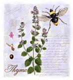 Thyme Herb Art Print