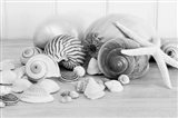 Collection of Shells BW Art Print