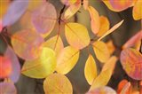Fall Leaves 2 Art Print