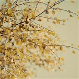 Fall Leaves 10 Art Print
