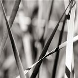 Leaves BW 2 Art Print