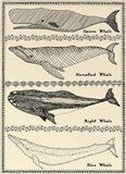 Scrimshaw Whale Art Print
