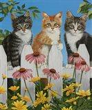 Backyard Kittens Art Print