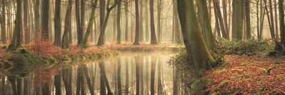The Healing Power of Forests Art Print by Podt
