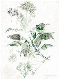Verbena Botanical Art Print