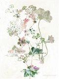 Boho Geranium Botanical Art Print